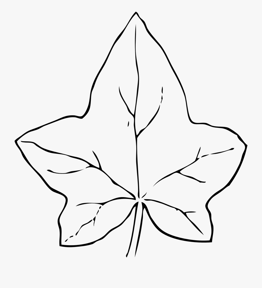 Leaf Outline Fall Leaves Search Result Cliparts For Leaf Clipart Black And White Free Transparent Clipart Clipartkey