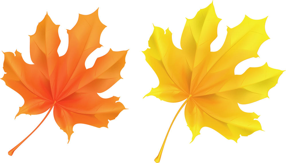 medium resolution of fall leaf clipart no background yellow and orange leaves 5946x3374