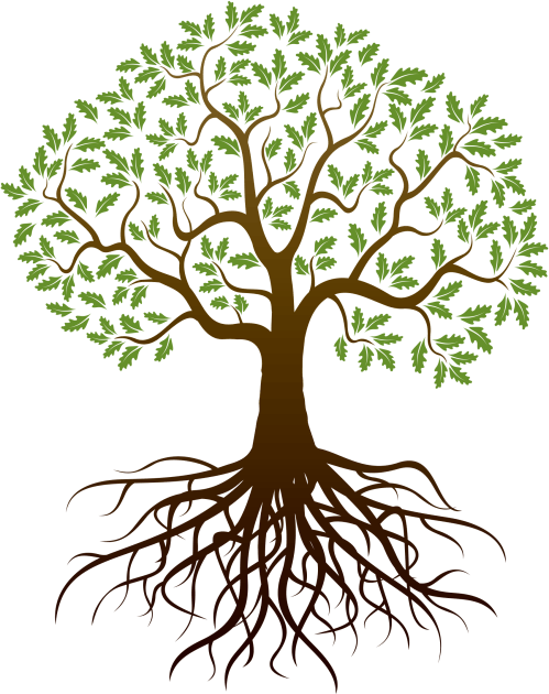 small resolution of barnes family reunion tree clipart with roots 1699x2143