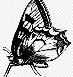 black and white butterfly animal free black white clipart anatomical butterfly i throw blanket [ 840 x 1081 Pixel ]