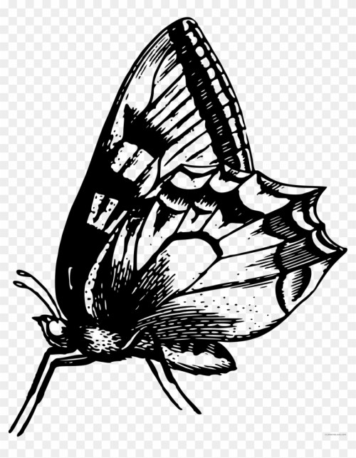 small resolution of black and white butterfly animal free black white clipart anatomical butterfly i throw blanket