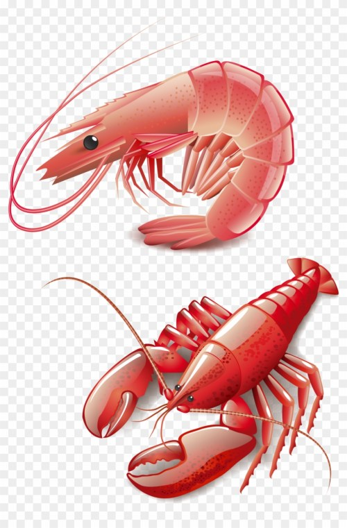 small resolution of seafood homarus cooking red lobster clip art vector graphics