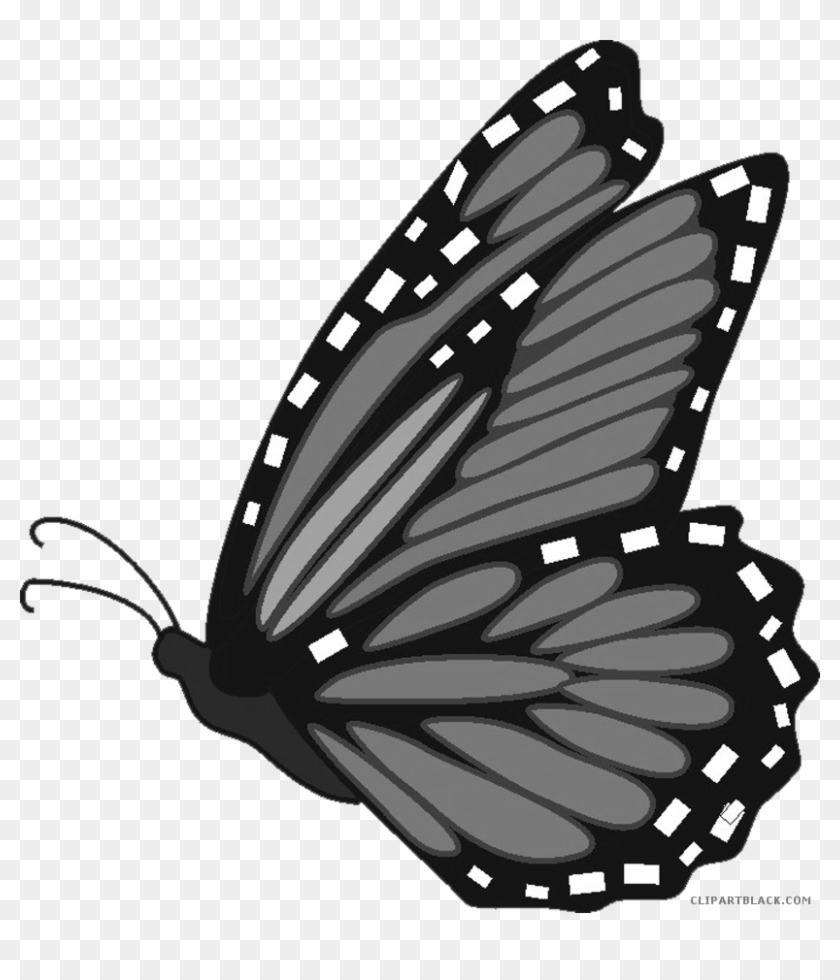 hight resolution of monarch butterfly clipart clipartblack com rh clipartblack butterfly monarch clip art