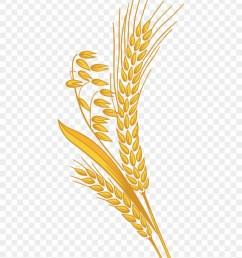 12 grain rice grain clipart png 998078 [ 840 x 1031 Pixel ]