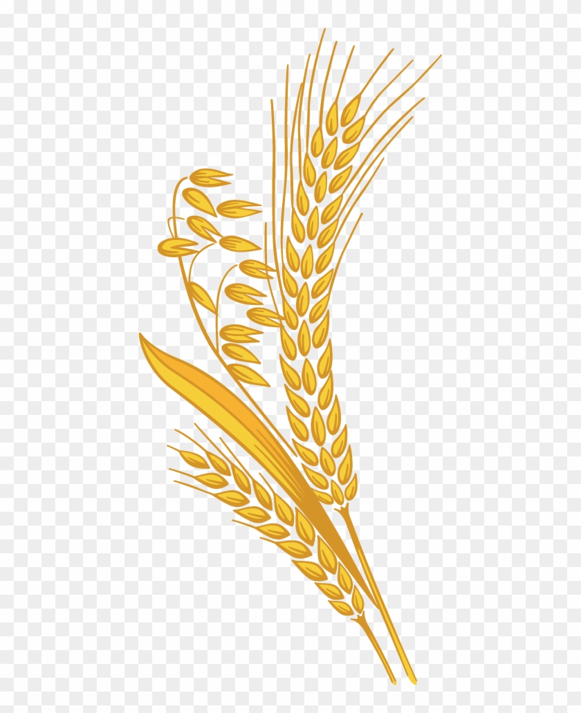 hight resolution of 12 grain rice grain clipart png 998078