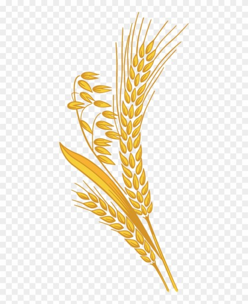 small resolution of 12 grain rice grain clipart png 998078
