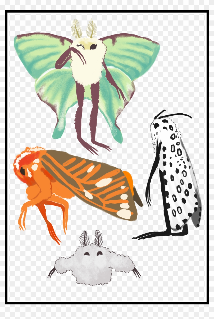 medium resolution of the best moth tags tumblr pict for pink butterfly clipart butterfly