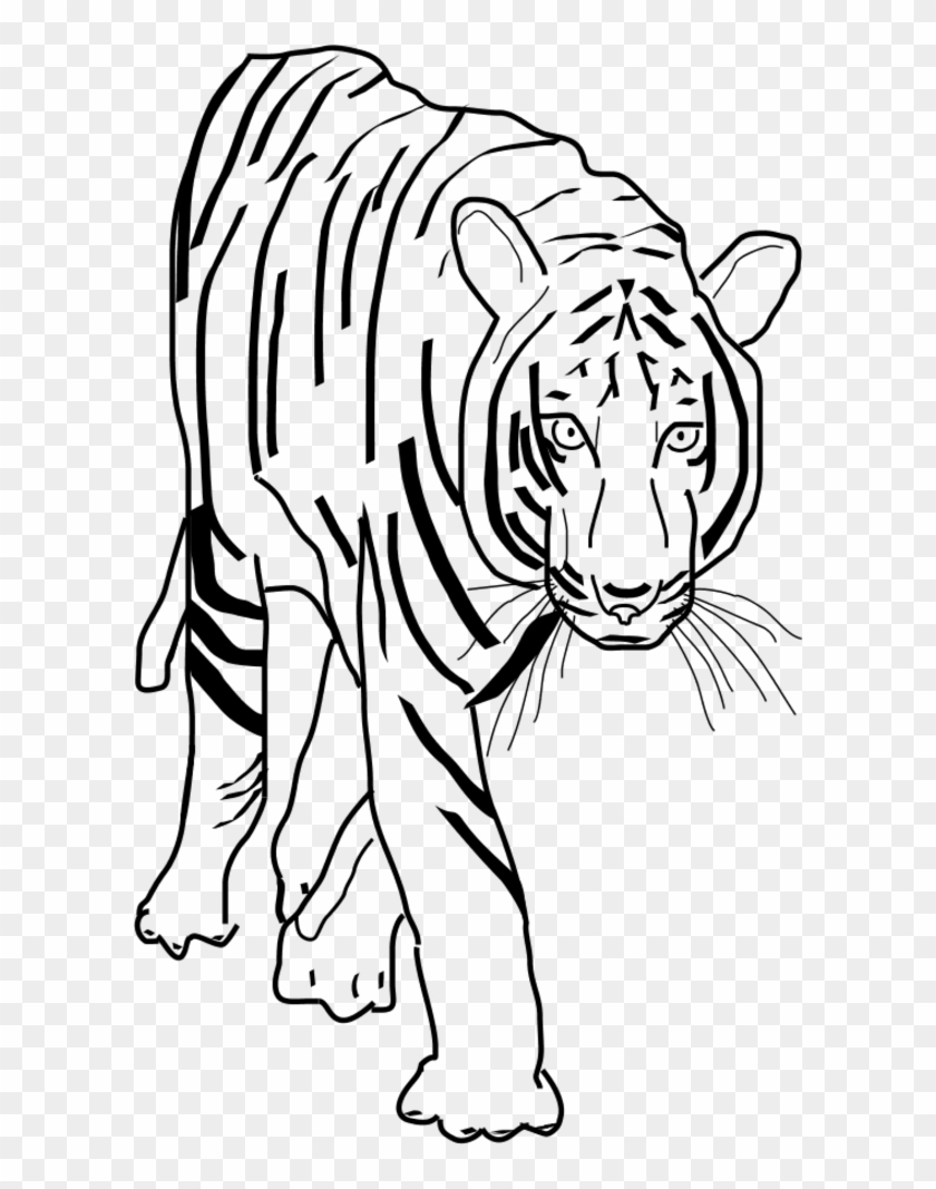 hight resolution of vector clip art tiger clipart black and white png 201445