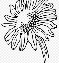 plant clipart black and white black and white sunflower clipart 27369 [ 840 x 1173 Pixel ]