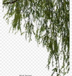 free tree branch png willow tree branch png 1322621 [ 840 x 1049 Pixel ]