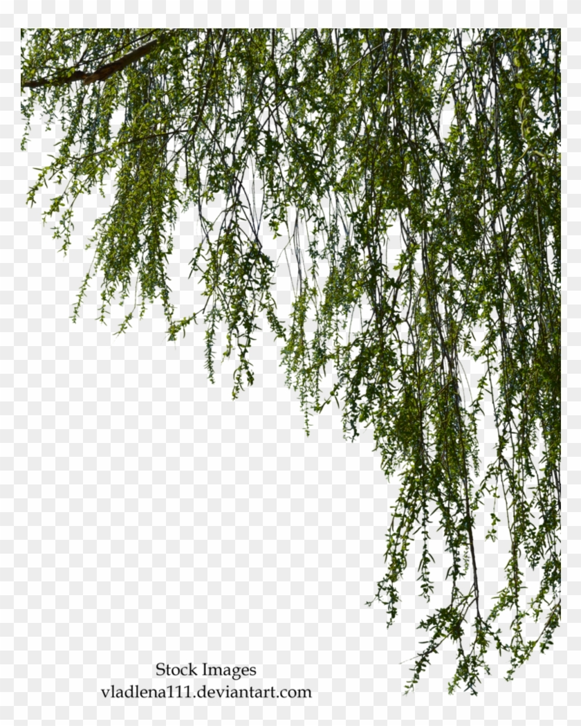 hight resolution of free tree branch png willow tree branch png 1322621