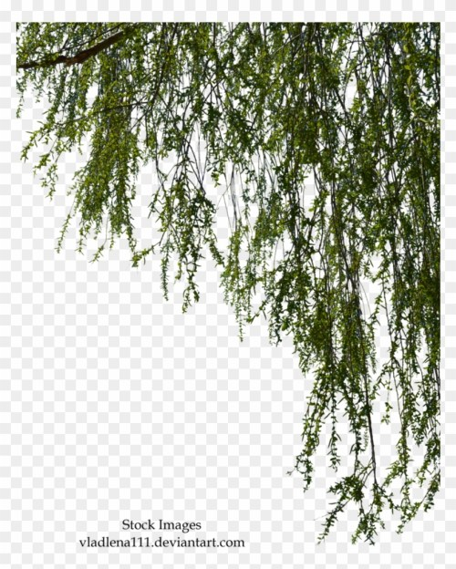 small resolution of free tree branch png willow tree branch png 1322621