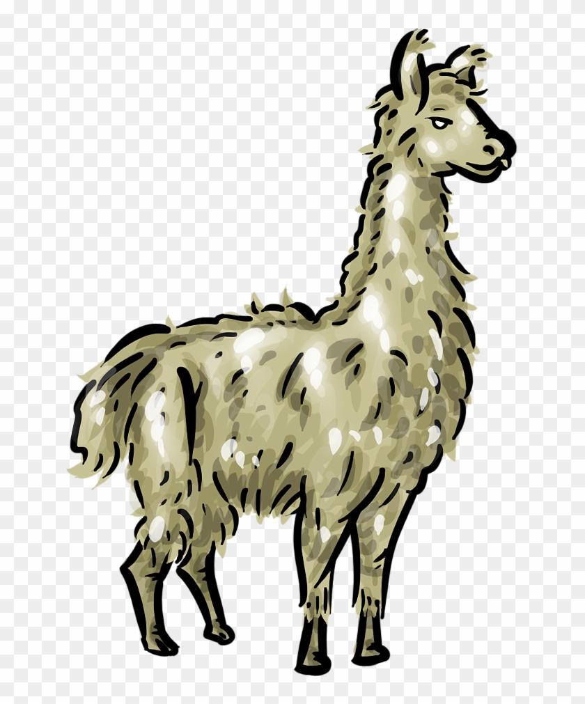 medium resolution of free llama clipart 1 page of public domain clip art clipart of a llama