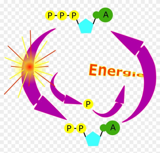 microsoft atp diagram free electrical wiring diagram  atp