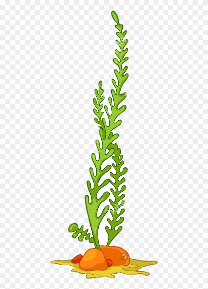 medium resolution of algae seaweed aquatic plants clip art algae vector 302596