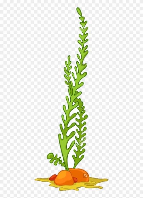 small resolution of algae seaweed aquatic plants clip art algae vector 302596