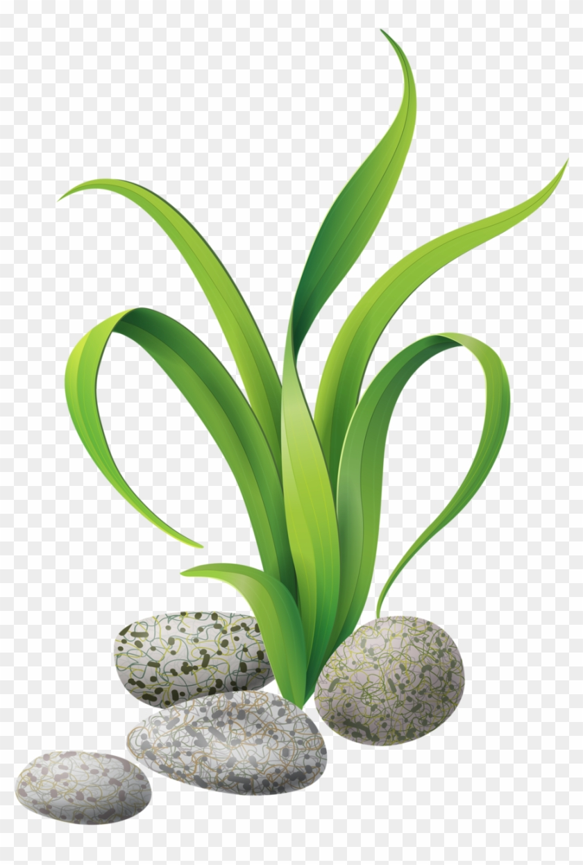 medium resolution of seaweed clipart gif 417687