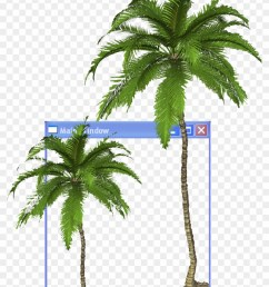 arecaceae youtube aesthetics clip art coconut tree transparent background [ 840 x 1156 Pixel ]