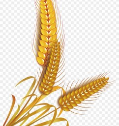 wheat rice cereal whole grain clip art rice vector png 434248 [ 840 x 1234 Pixel ]