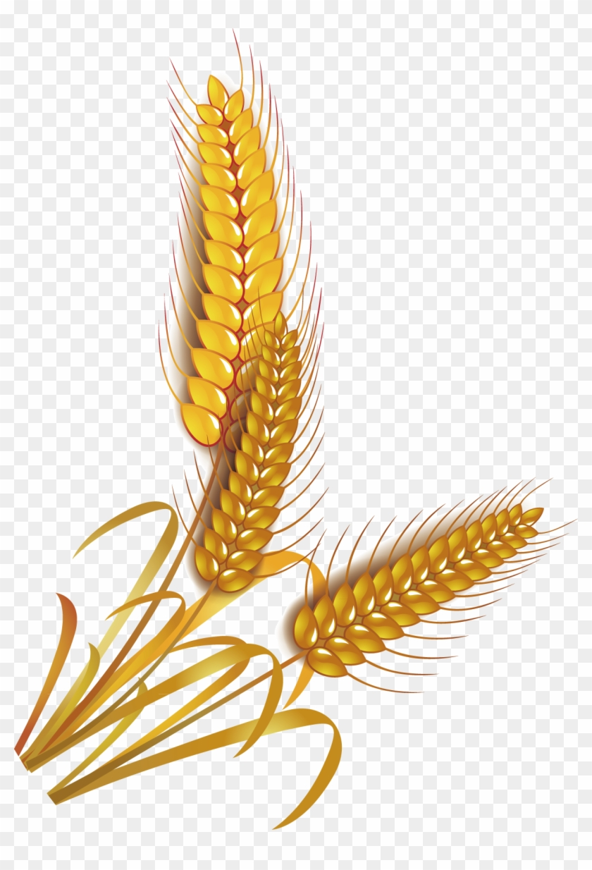 hight resolution of wheat rice cereal whole grain clip art rice vector png 434248