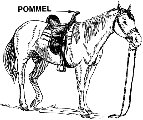 Free Horse Tack Clipart, 1 page of Public Domain Clip Art