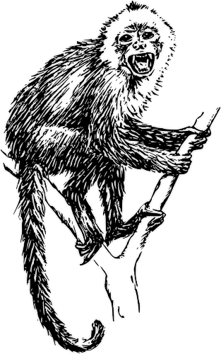 Free Monkey in a Tree Clipart, 1 page of Public Domain