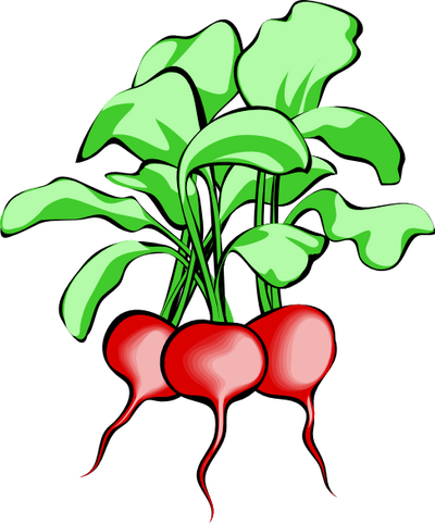 free vegetable clipart 14 pages