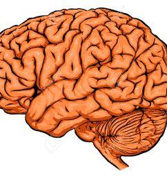 brain clipart brain clipart brain [ 1300 x 1041 Pixel ]