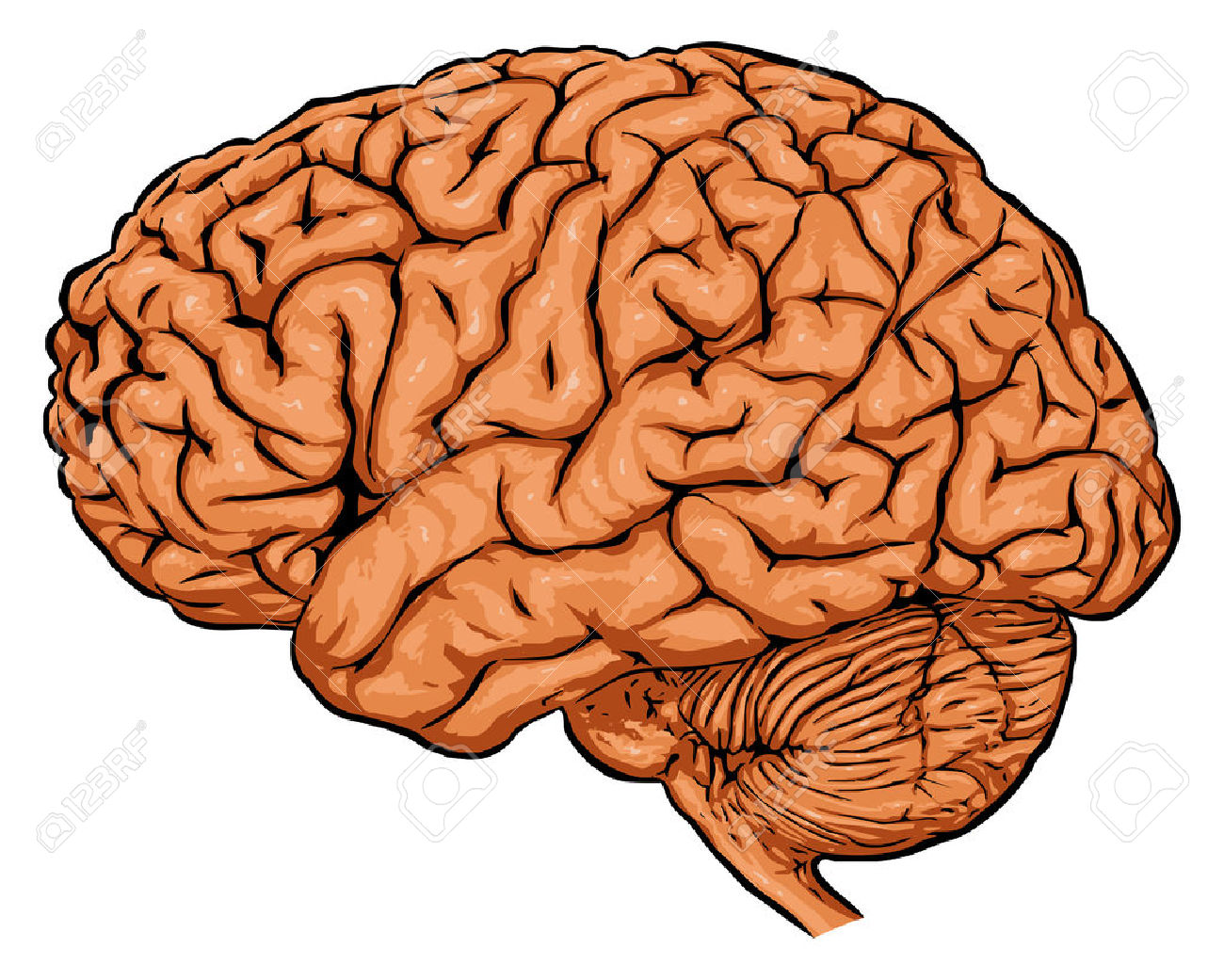 hight resolution of brain clipart brain clipart brain