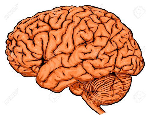 small resolution of brain clipart brain clipart brain