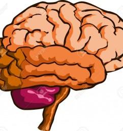 brain clipart brain clipart cliparts stock [ 1024 x 941 Pixel ]