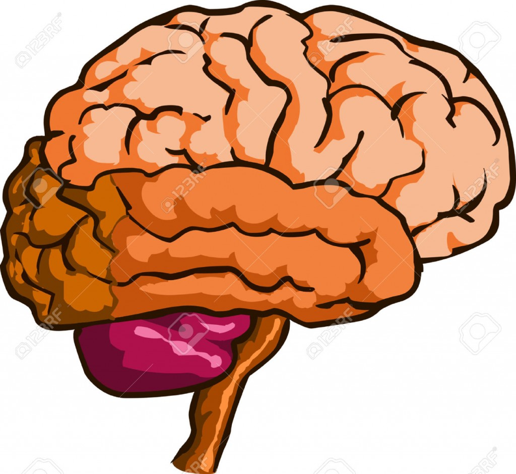 hight resolution of brain clipart brain clipart cliparts stock