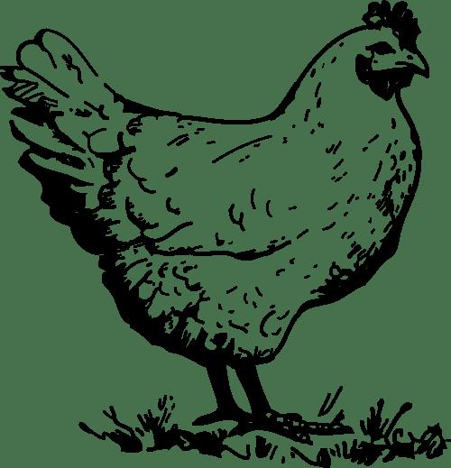small resolution of chicken clip art clipart chicken