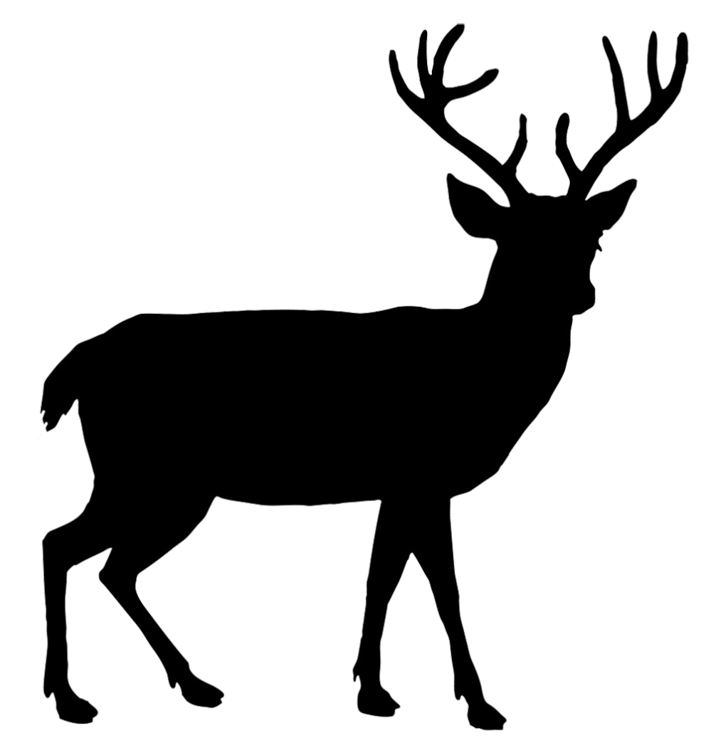 medium resolution of beautiful deer silhouette