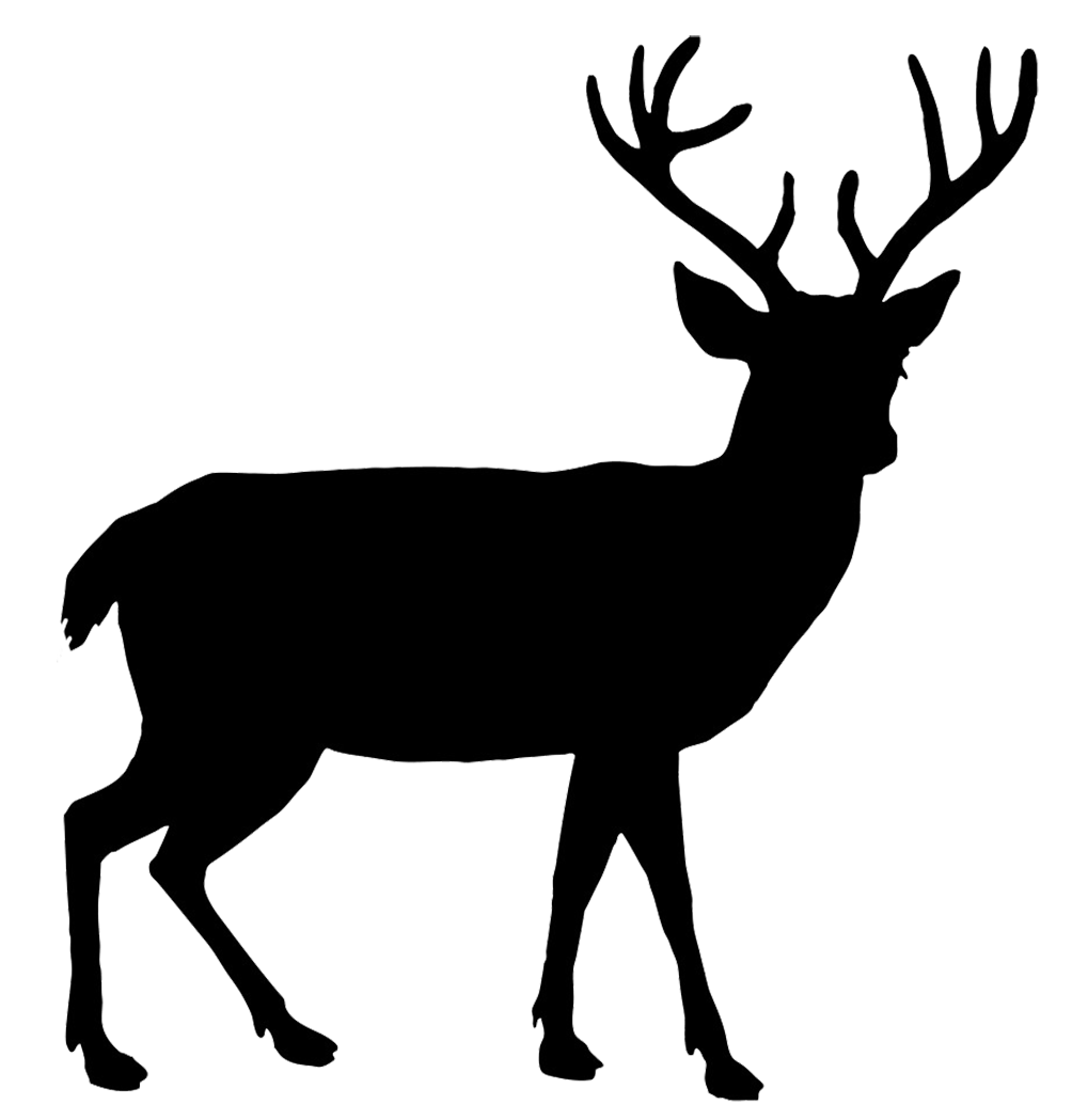 hight resolution of beautiful deer silhouette