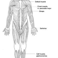 Skin Assessment Diagram Wiring For Jvc Car Radio Human Body - Medical Clipart