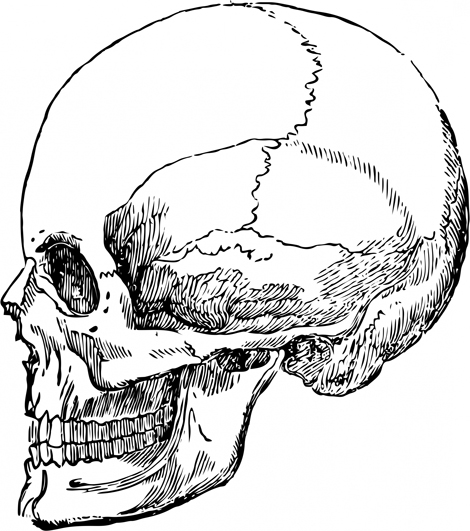 Cool Skull Clip Art And Funny