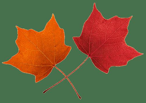 fall leaves clip art - beautiful