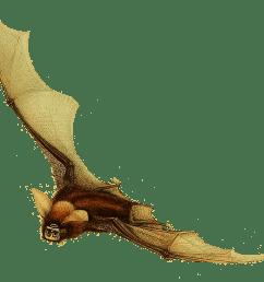 timor bat clipart [ 1181 x 1032 Pixel ]