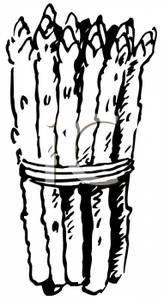 Clip Art Image: Food Coloring Page of Asparagus Spears