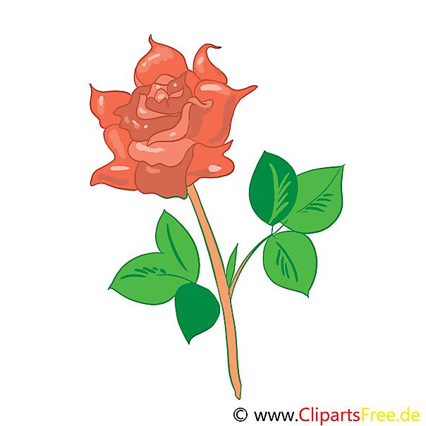 Rose Bild Clip Art Grafik Illustration kostenlos