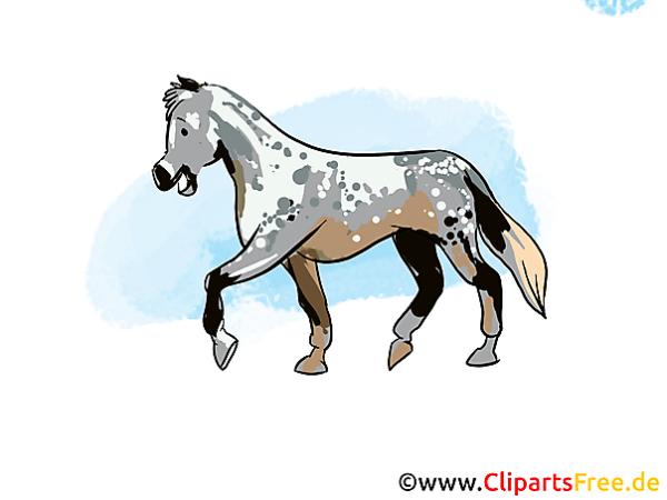 Horses Illustrations And Clip Art