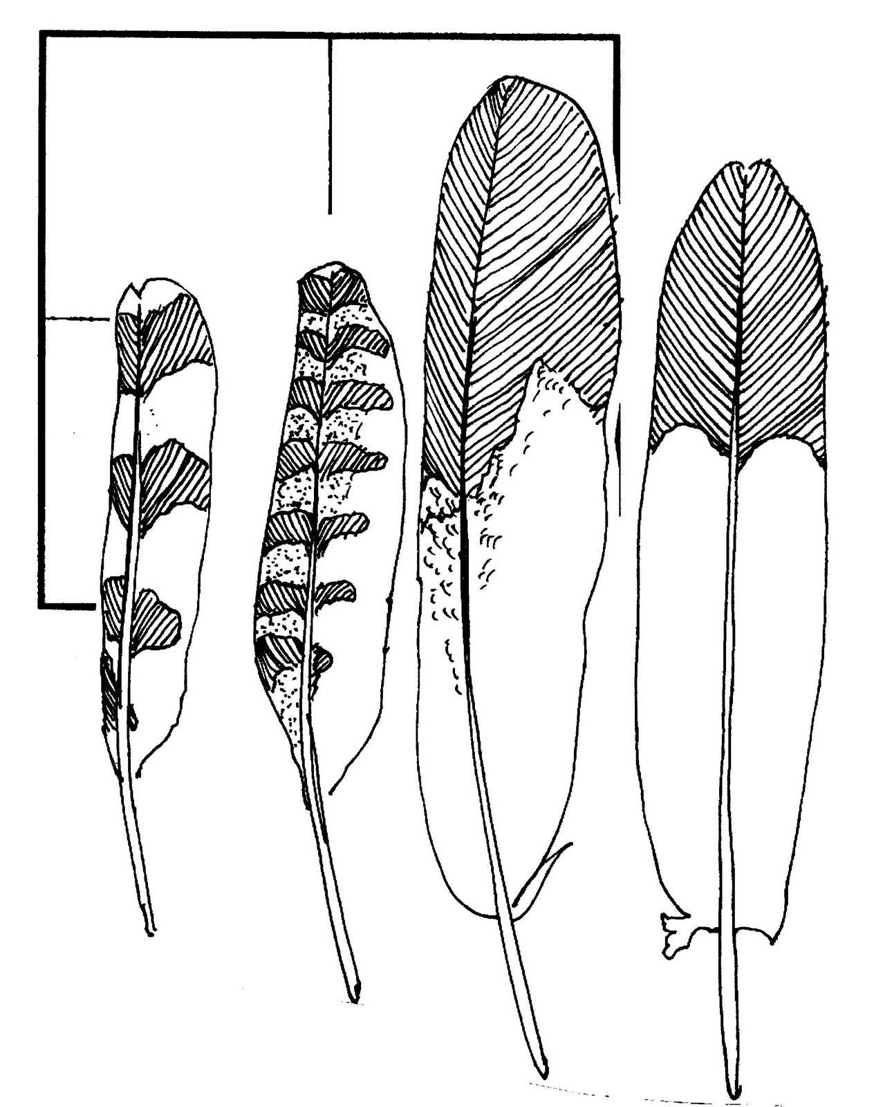 Eagle Feathers Drawings To Feathers For My #QoVbHD