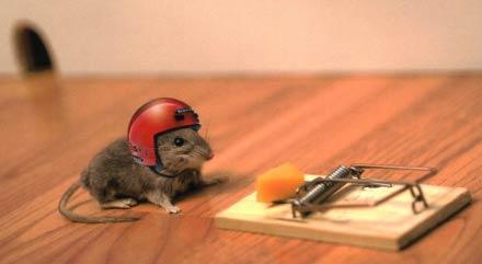 trampa-ratones