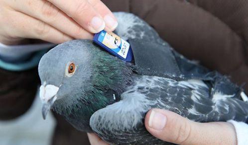paloma mensajera digital 2.0