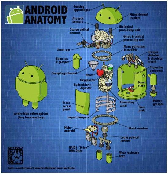 Anatomía Android (Androidus Robosapiens) | Clipset