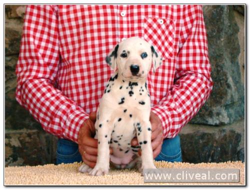 cachorra alealudere de cliveal 2