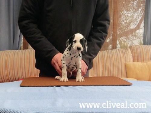 cachorro xenii de cliveal 2