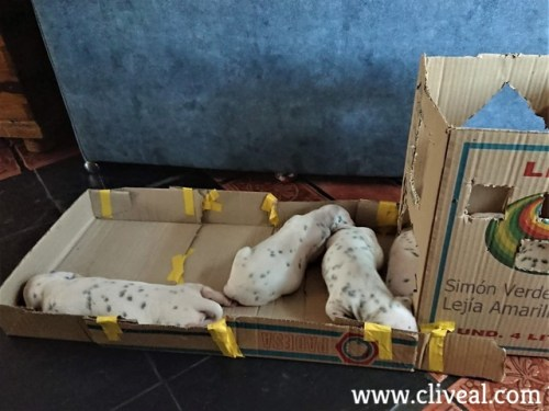 cachorros en parque de carton