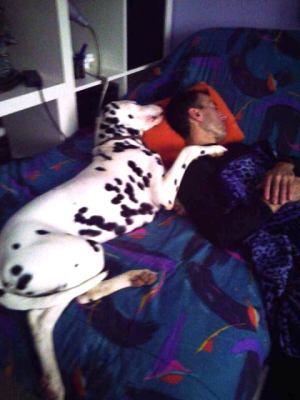 dalmata Cooper durmiendo la siesta con su dueño